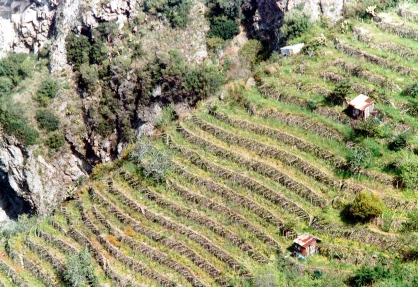Aziende Vinicole Italiane - Enopolis Costa Viola