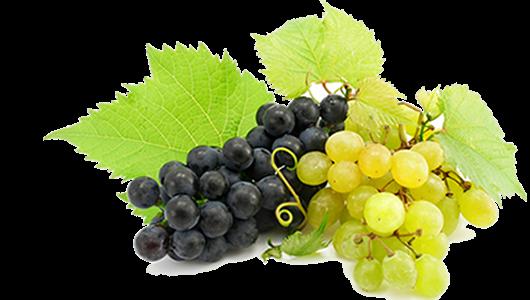 Produttori vino italiani